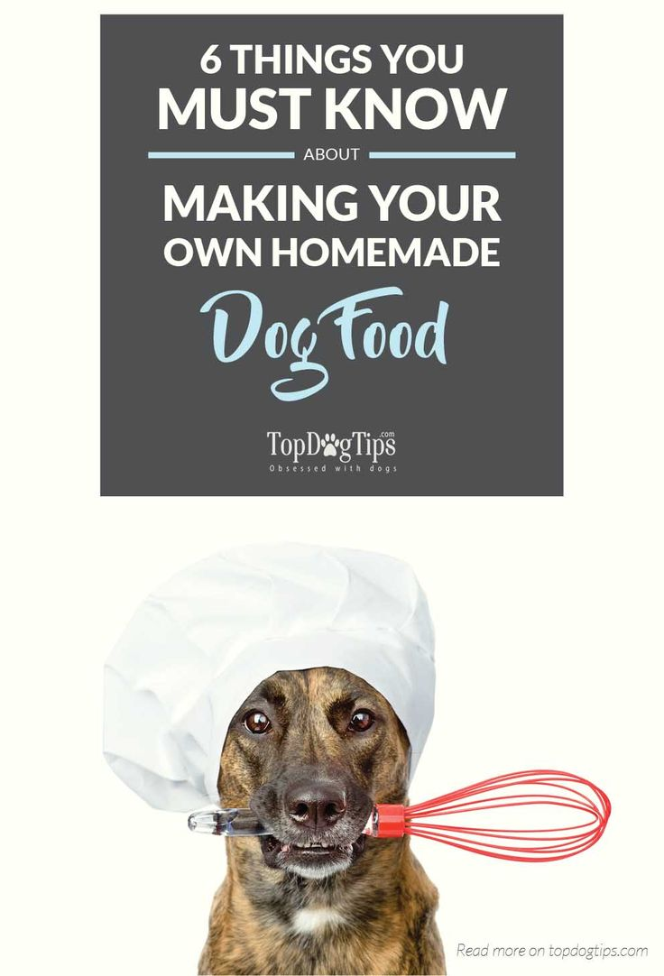 55 best homemade dog food treats images on pinterest homemade 6 must know tips for making your own homemade dog food try making your forumfinder Image collections