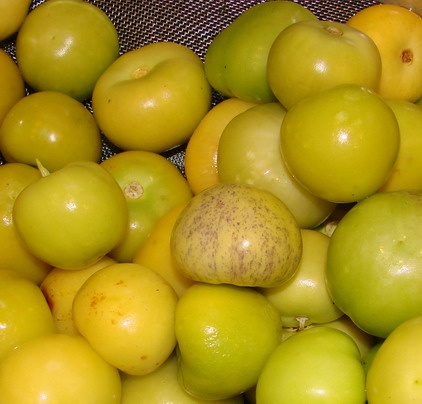 Tigers & Strawberries » Tomatillo Salsa for Hot Water Bath Canning