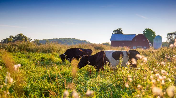 Advocates of grass-grazing cattle say it's better for the environment and the animals. But there's another upside: Grass-fed meat and dairy fetch a premium that can help small farms stay viable.