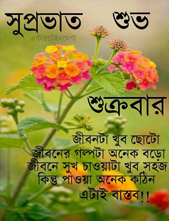 How To Grow Bright Beautiful Zinnias In 2020 Zinnia Flowers Zinnia Garden Beautiful Flowers Garden