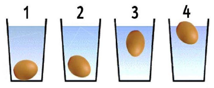 O ovo é um alimento bom e saudável que deveria ser sempre presente em uma dieta bem balanceada. Muitas pessoas não sabem quanto tempo um ovo pode ser conservado antes de chegar à data de validade.