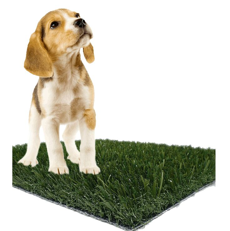 Potty Pad For Dog Bed