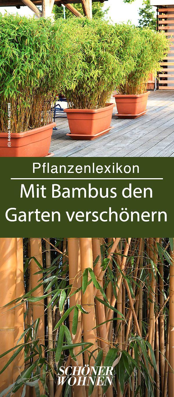Bambus – pflanzen, schneiden & mehr – Pflanzen