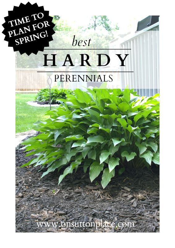 Tried and true hardy #perennials | The DIY Gardener's Guide.