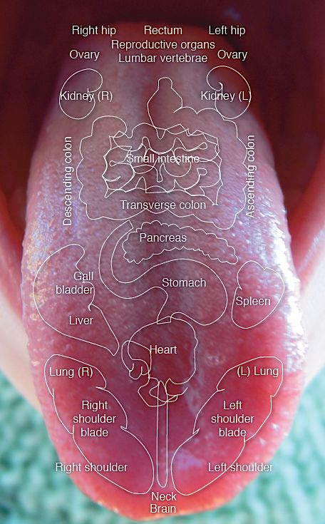 Your body communicates with you through different ways including your tongue. Explore your tongue every morning to determine the state of your digestion and general health!: Your body communicates with you through different ways including your tongue. Explore your tongue every morning to determine the state of your digestion and general health!