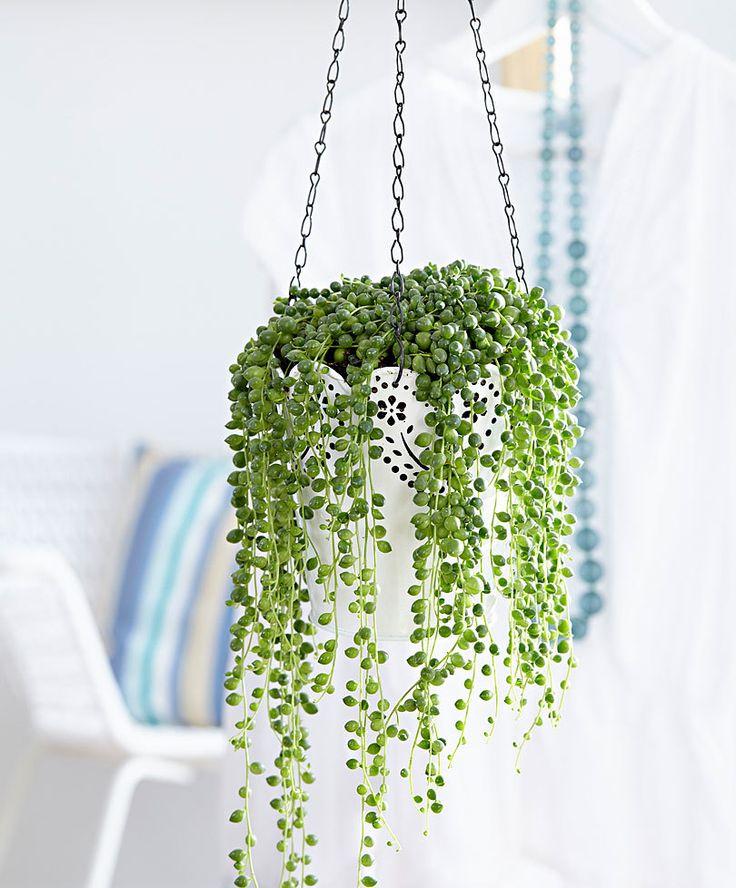 Свисающие комнатные растения фото и названия