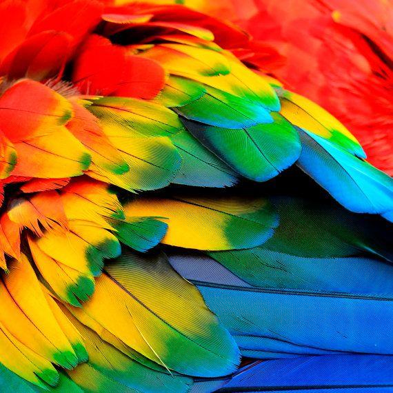 Parrot feathers wall art art print impresiones por Chachaprints