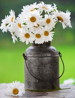 My favorite center piece for my kitchen table ♥ daisies