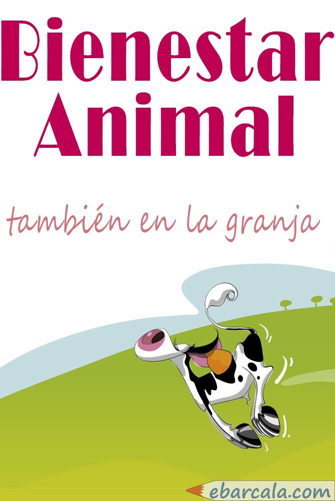 Happy cow. Vaca feliz en una gran pradera. Bienestar animal. Animal wellfare.