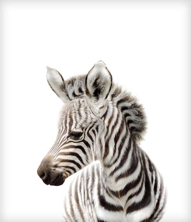 Safari Nursery Decor, Zebra Print, PRINTABLE Art, Safari Animals Wall Art, Baby Zebra, Safari Theme, Nursery Wall Art, Baby Animal Prints – …