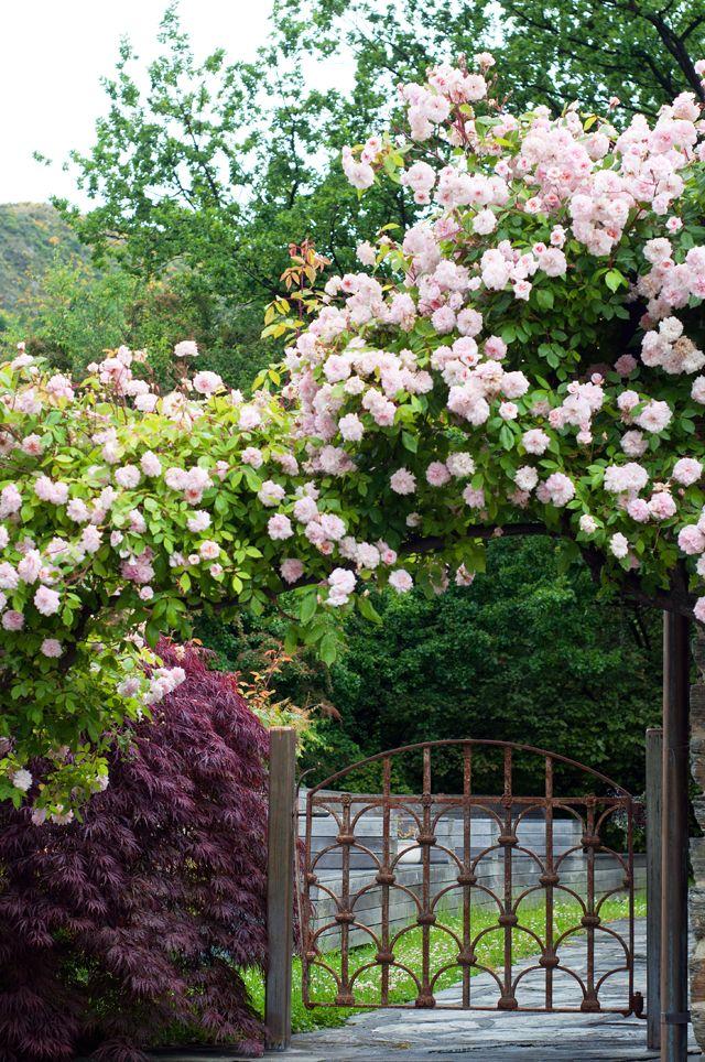 portão florido