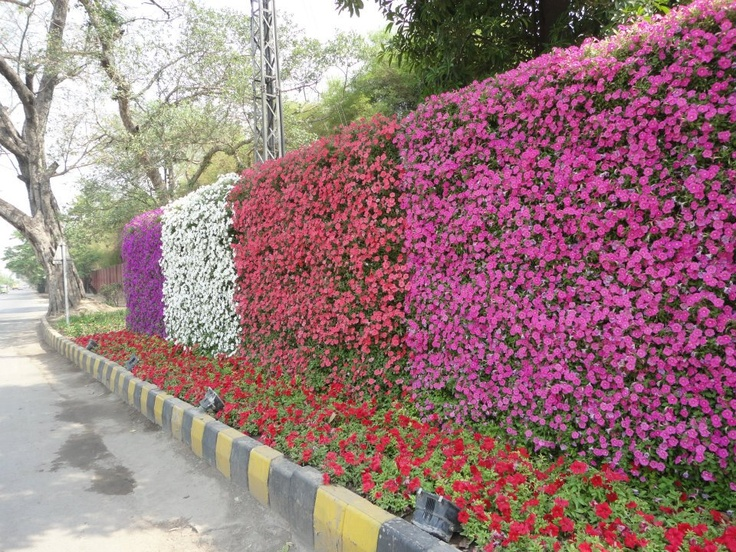 Vertical living wall, Pakistan