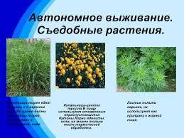 Картинки по запросу съедобные растения