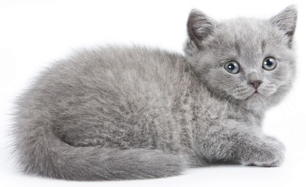 An Enormous List Of 100 Ever So Cute Names For Your Gray Kitten
