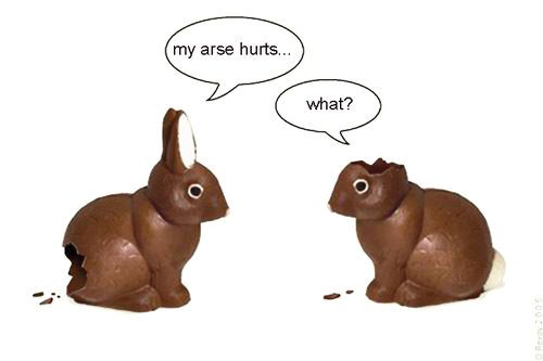 : Thoughts, Bunnies 3, Nice Dresses, Chocolate Bunnies, Favorite Funnies, Easter Chocolates, New Shoes, Happy Easter, Chocolates Bunnies