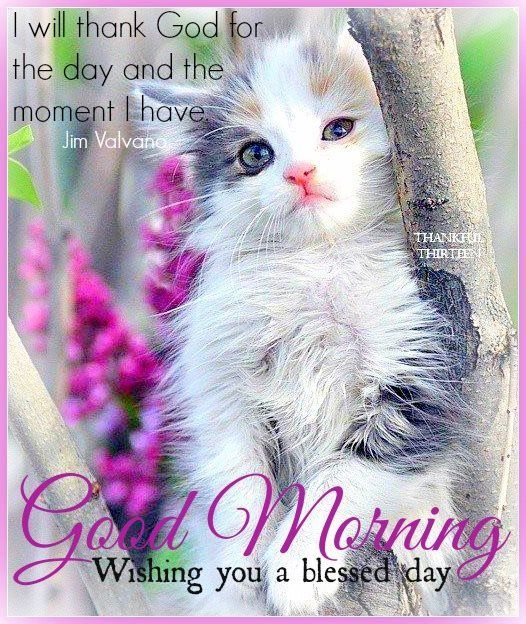 Good Morning Wishing You A Blessed Day