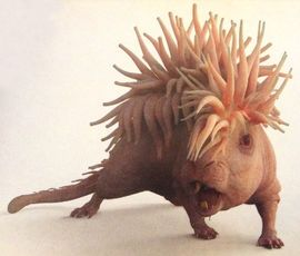 Murlap | Wiki Harry Potter | Fandom powered by Wikia s a marine beast resembling a rat with a growth on its back resembling a sea anemone, found on the coastal areas of Britain.