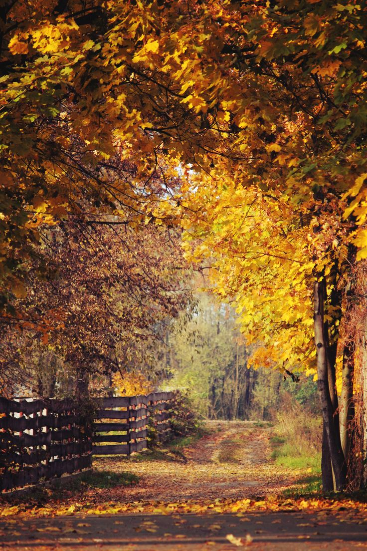 From the book where you might see the beautiful autumn leaves - Autumn Is My Favorite Time Of The Year For Many Reasons I Love Anything Spooky And I Love Halloween