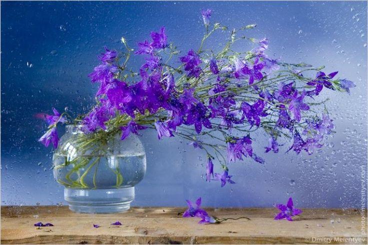 Gallery.ru / Фото #52 - Фотографии цветов (ассорти) - Alexandra-Fedorova