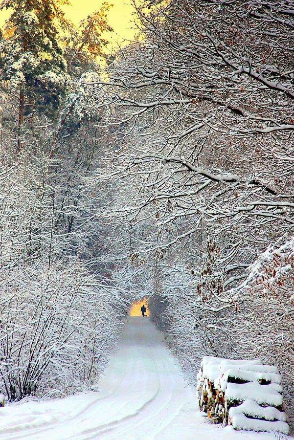 Winter pathway to walk along and reflect on the beauty around us!