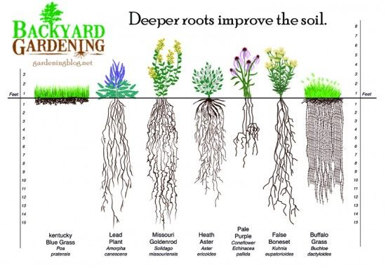 Improving Soil By Picking Deeply Rooted Plants Top Soil
