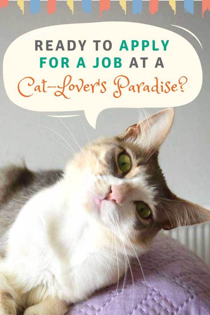 Ready To Apply For A Job At A Cat Lover S Paradise Anything Cats Cats Cat Lovers Cats Kittens