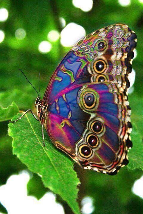 Mix colour butterflies