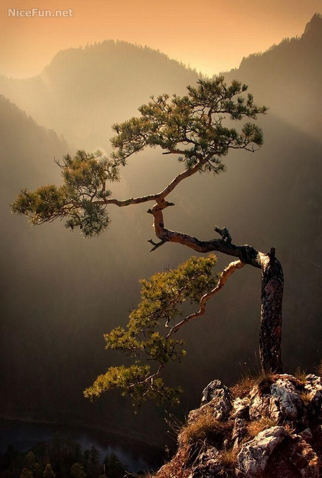 Natural Bonsai | Most Beautiful Pages