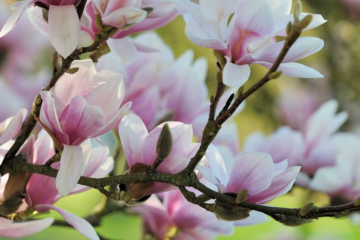 The one tree that will make your front garden complete