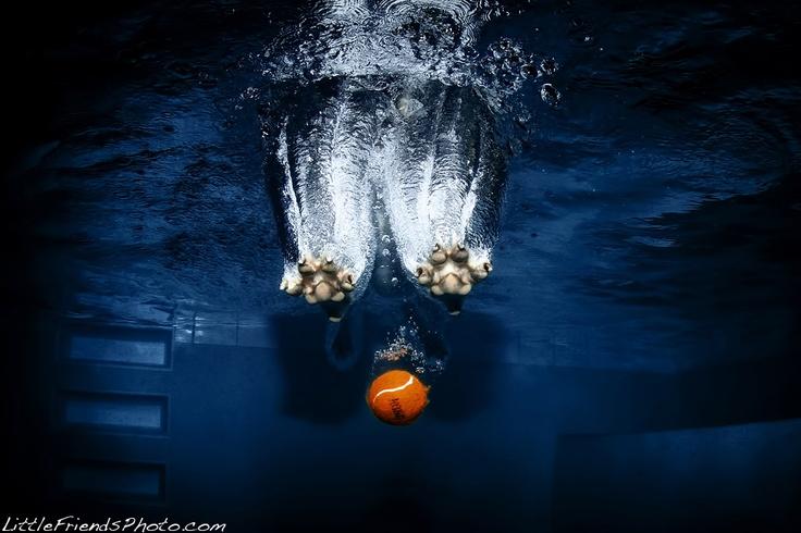 Underwater Dogs by Seth Casteel - http://www.littlefriendsphoto.com/