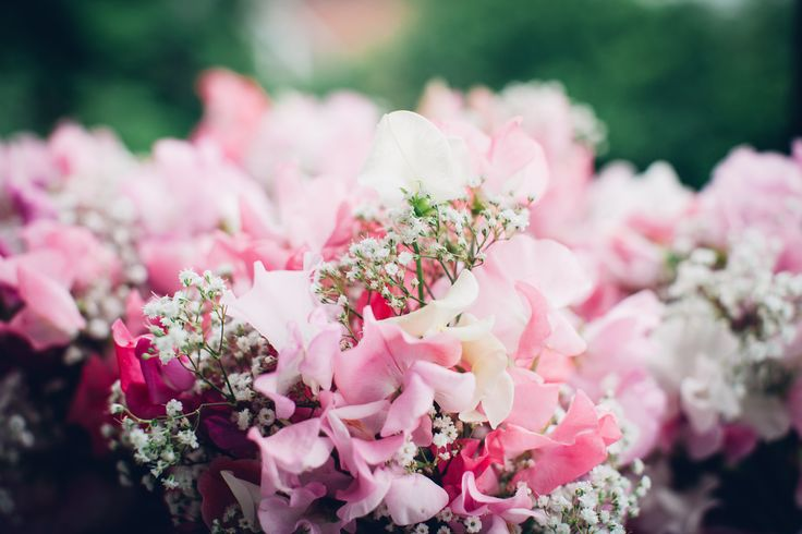 Bridemaids' bouquets - sweet peas and gypsophila