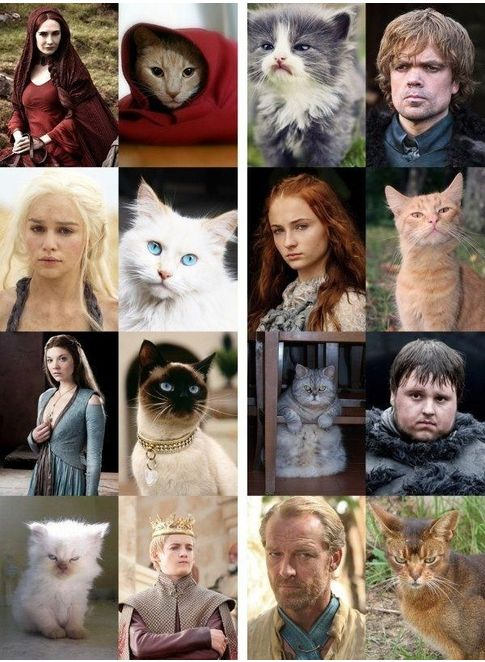 Cats Rule! #gameofthrones