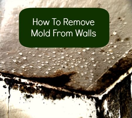 How To Remove Mold From Walls  Remove Pinterest