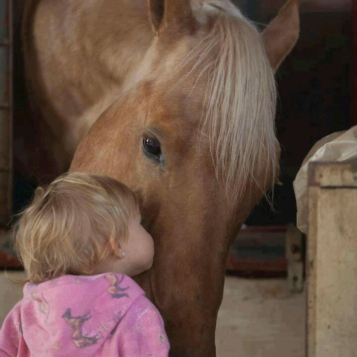 DOLLY ZEN All horses deserve, at least once in their lives, to be loved by a little girl ~ Author Unknown ❤ Dolly