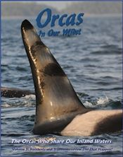 Orcas in our Midst
