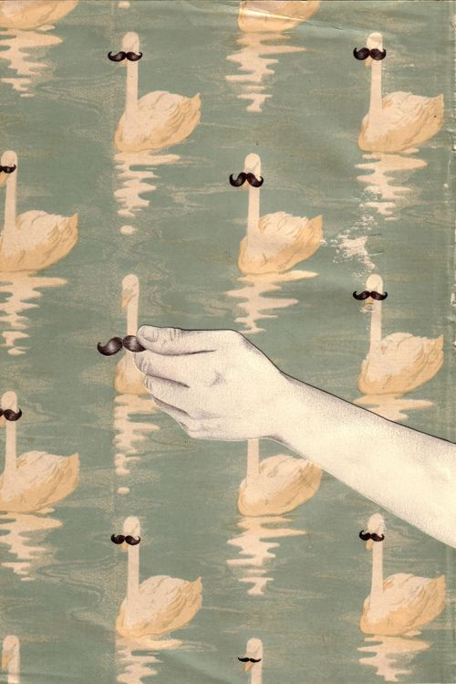 swan-stachePrints Pattern, Hipster, Birds Art, Black Swan, Whiskers, Flamingos, Animal Illustration, Mustaches, Bathroom Wallpapers