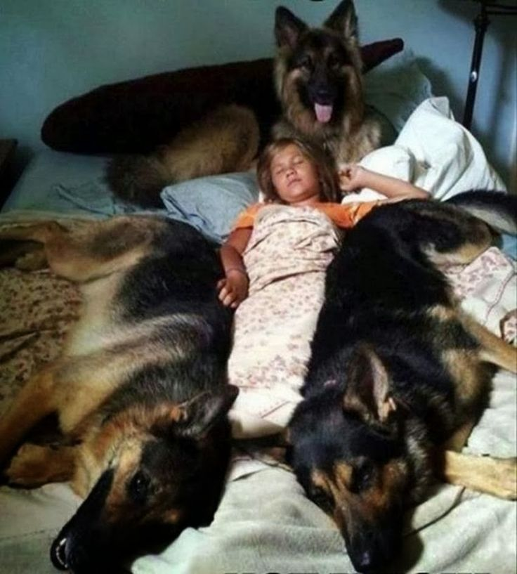 5 Amazing pics for German Shepherd lovers, that's called super security:)