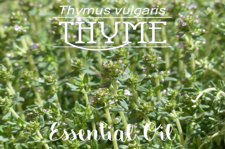 Online Shop | Thyme Essential Oil in South Africa | Oh deer! Studio