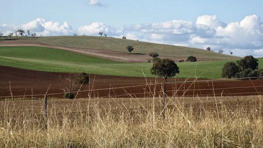 Fields, Cootamundra