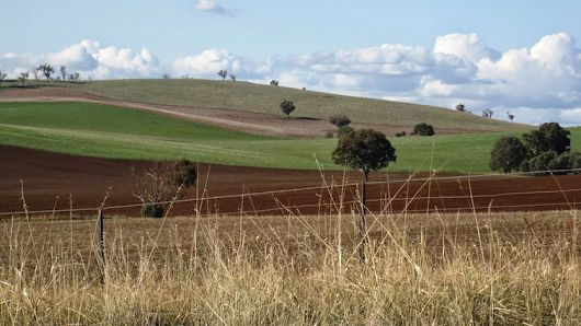 Fields, Cootamundra
