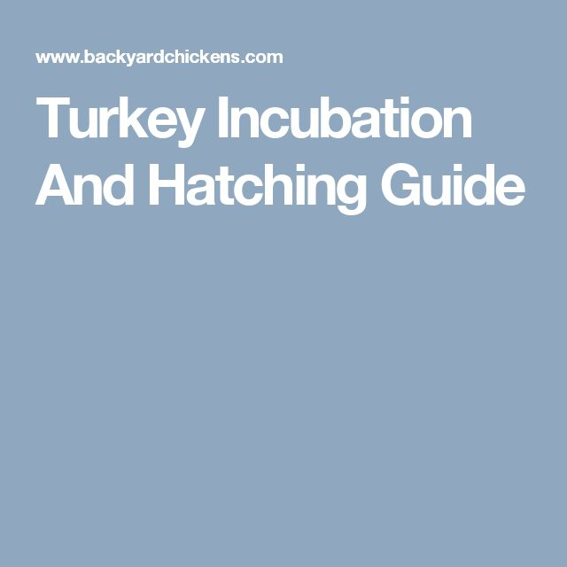 Turkey Incubation And Hatching Guide