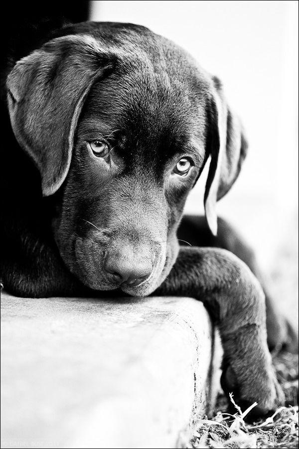 """""""Puppy dog eyes"""" by Daniel Bust"""