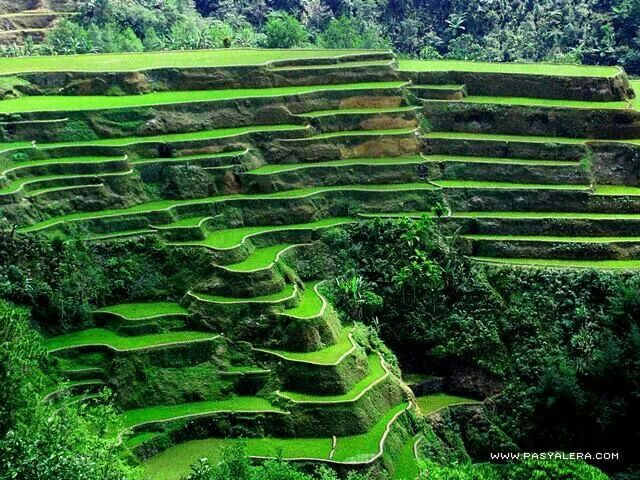 The Banaue Rice Terraces in the Philippines