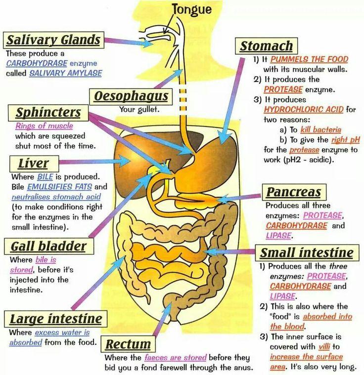 Body organs and illness