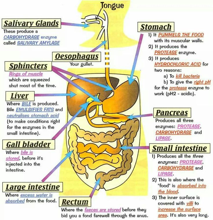 Body organs and illness