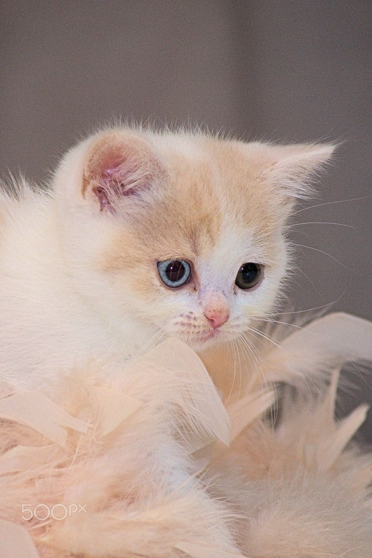 Biens heureux chatons - null