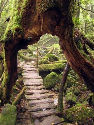 path through an old tree