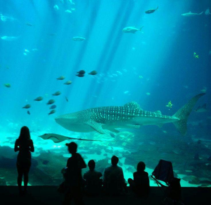 Georgia Aquarium Atlanta Aquariums Zoo 39 S Etc