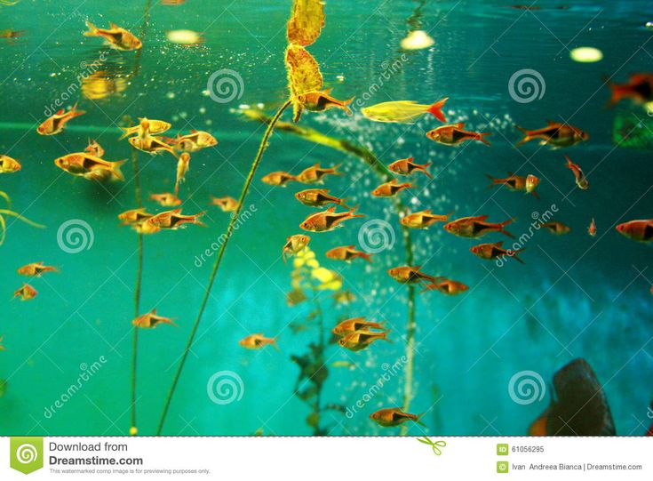 Tropical Fish Tank Aquarium - Download From Over 56 Million High Quality Stock Photos, Images, Vectors. Sign up for FREE today. Image: 61056295