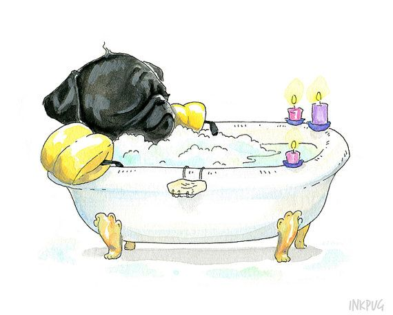 This little black pug in a tub is taking a moment to steam some wrinkles out amidst the pluot-scented bubbles -- but not without their swimmies! This cute